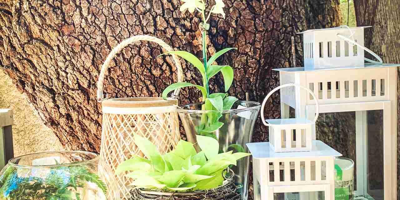 Botanical Garden Stores<br> A Garden of Gift Sales